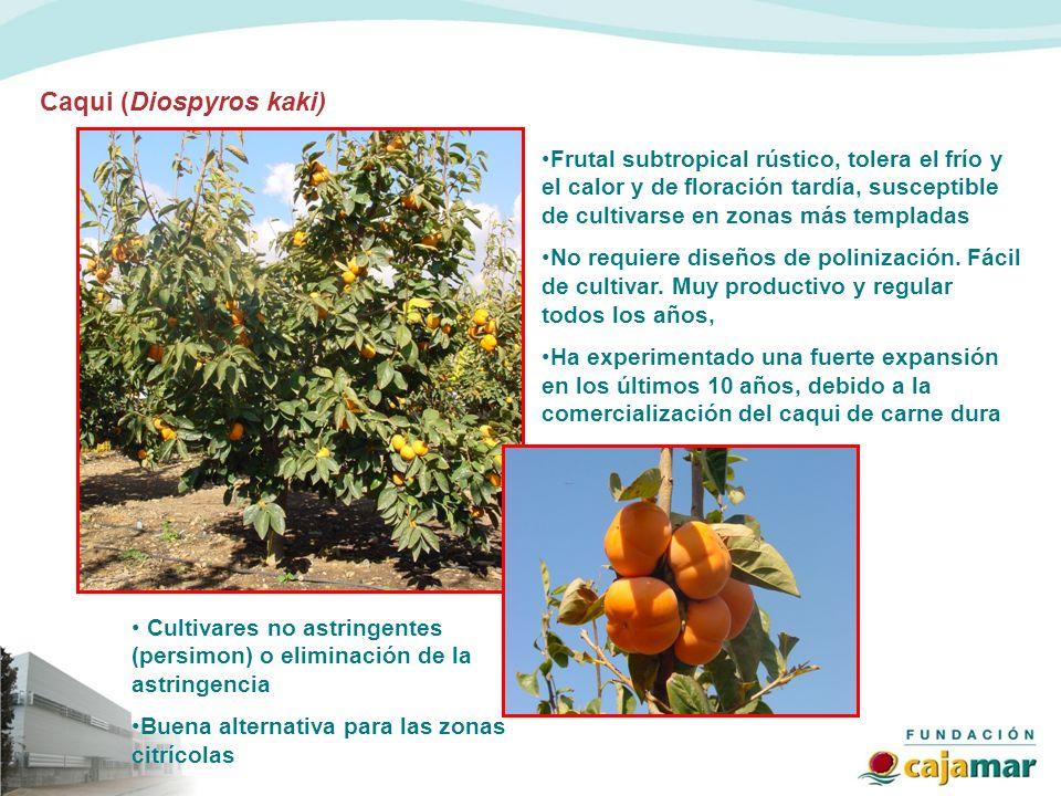 Caqui (Diospyros kaki) Frutal subtropical rústico, tolera el frío y el calor y de floración tardía, susceptible de cultivarse en zonas más templadas N