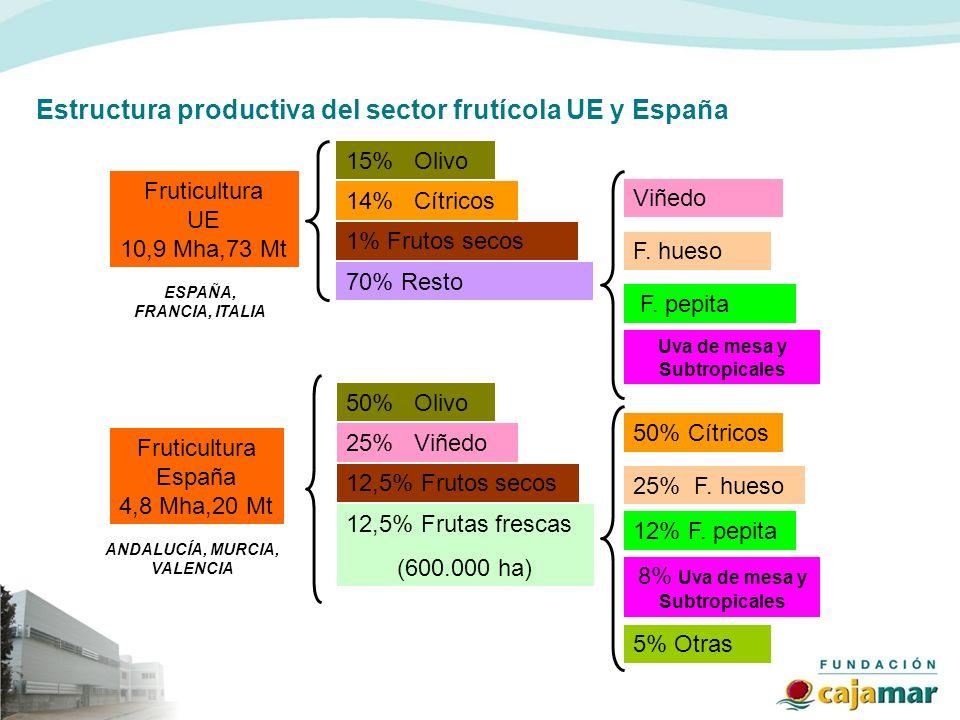Estructura productiva del sector frutícola UE y España Fruticultura UE 10,9 Mha,73 Mt 15% Olivo 14% Cítricos 1% Frutos secos 70% Resto Viñedo F. pepit
