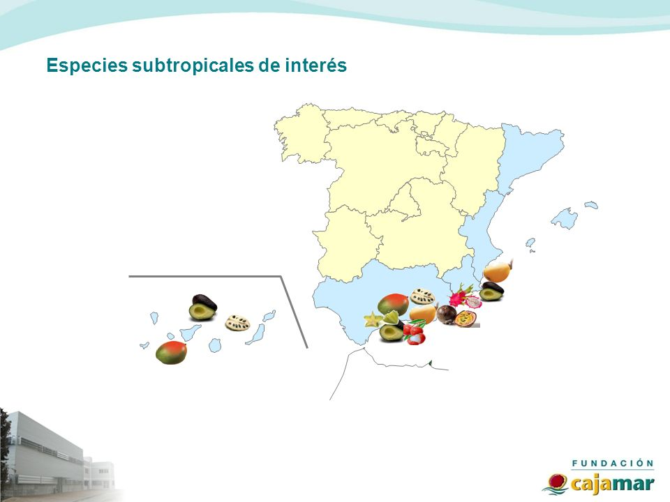 Especies subtropicales de interés
