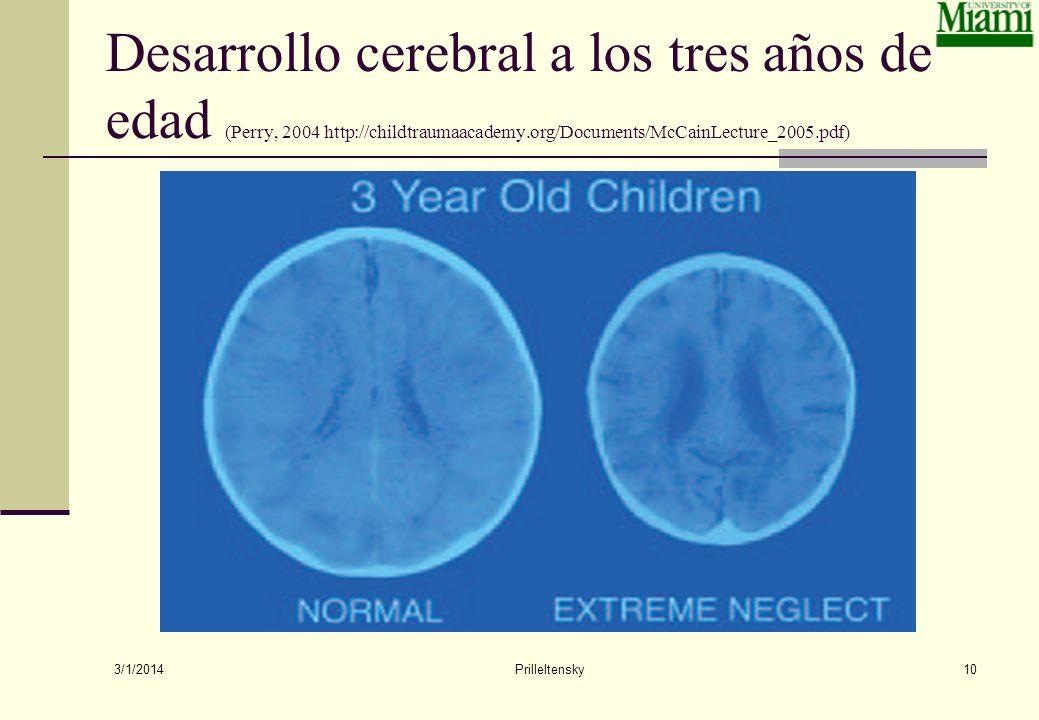 3/1/2014 Prilleltensky10 Desarrollo cerebral a los tres años de edad (Perry, 2004 http://childtraumaacademy.org/Documents/McCainLecture_2005.pdf)