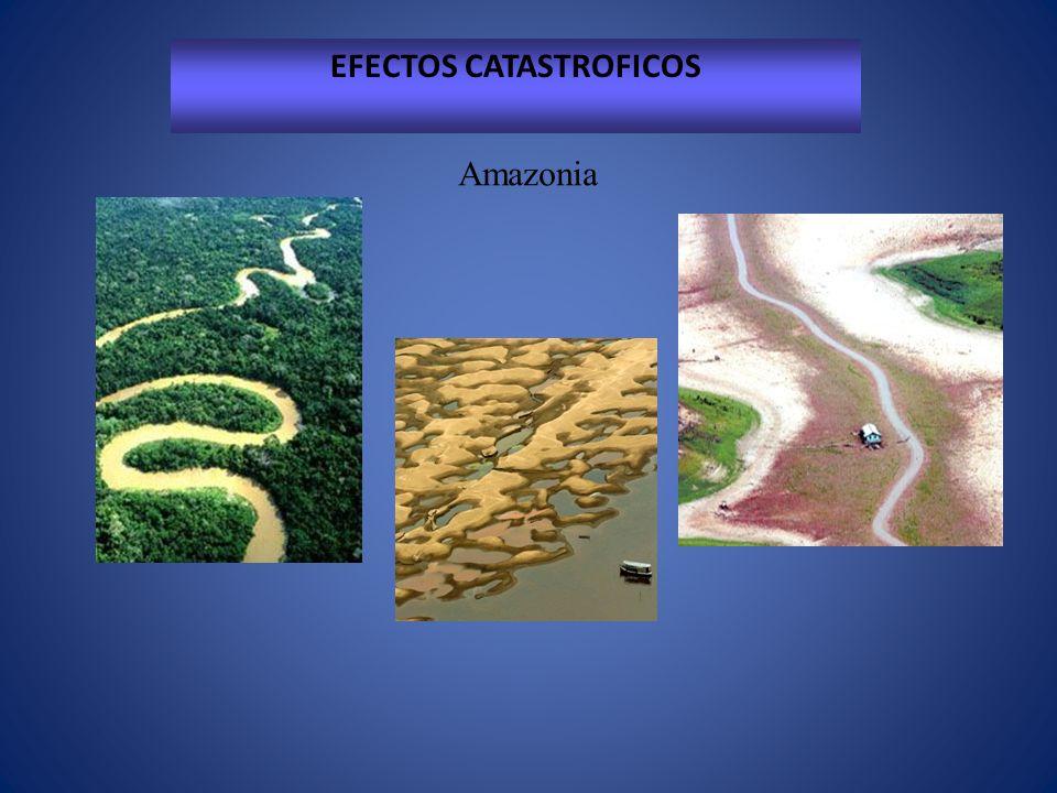 EFECTOS CATASTROFICOS Amazonia