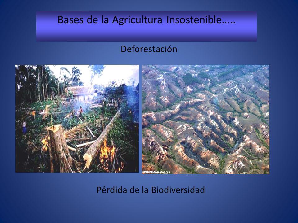 Bases de la Agricultura Insostenible….. Pérdida de la Biodiversidad Deforestación
