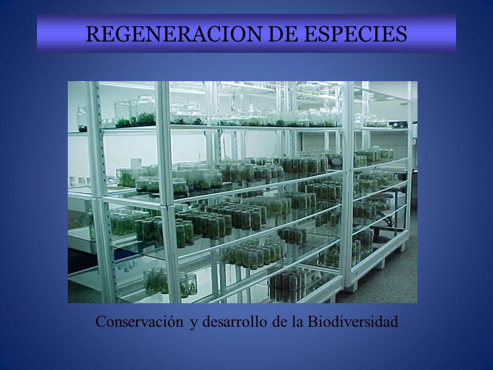 REGENERACION DE ESPECIES Conservación y desarrollo de la Biodiversidad
