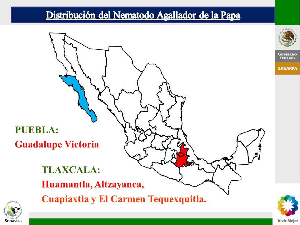 PUEBLA: Guadalupe Victoria TLAXCALA: Huamantla, Altzayanca, Cuapiaxtla y El Carmen Tequexquitla.