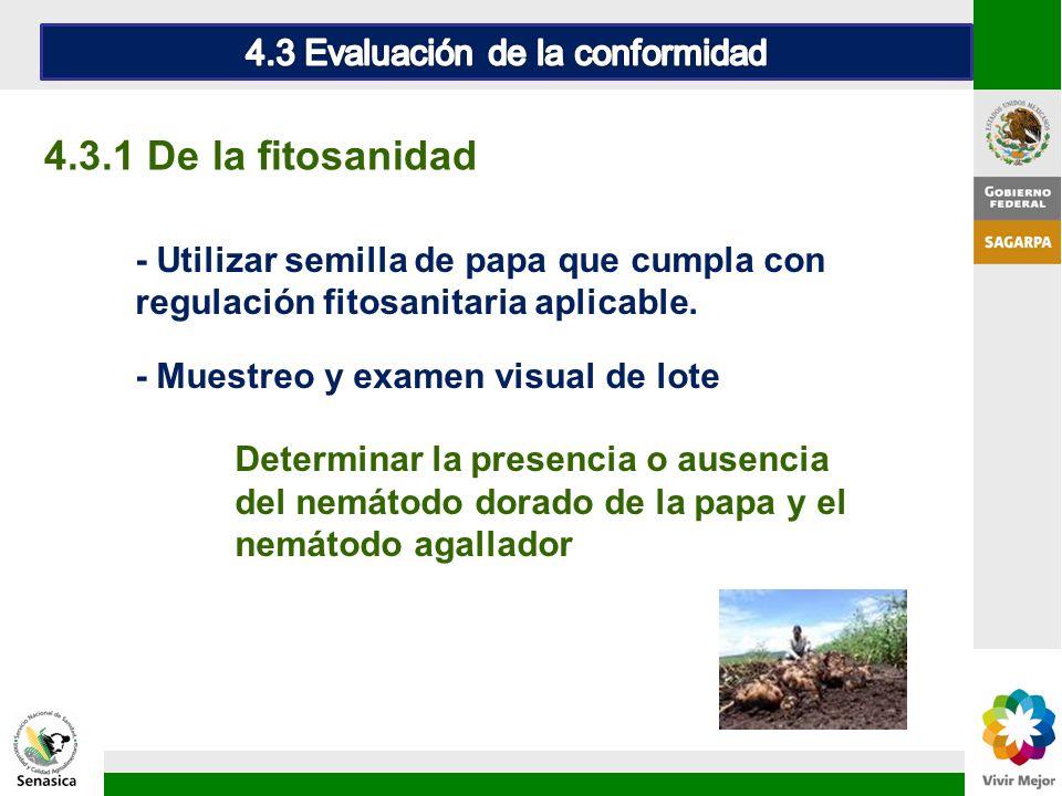 - Utilizar semilla de papa que cumpla con regulación fitosanitaria aplicable. - Muestreo y examen visual de lote Determinar la presencia o ausencia de