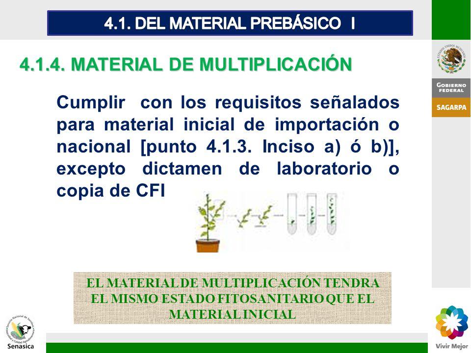 4.1.4. MATERIAL DE MULTIPLICACIÓN Cumplir con los requisitos señalados para material inicial de importación o nacional [punto 4.1.3. Inciso a) ó b)],