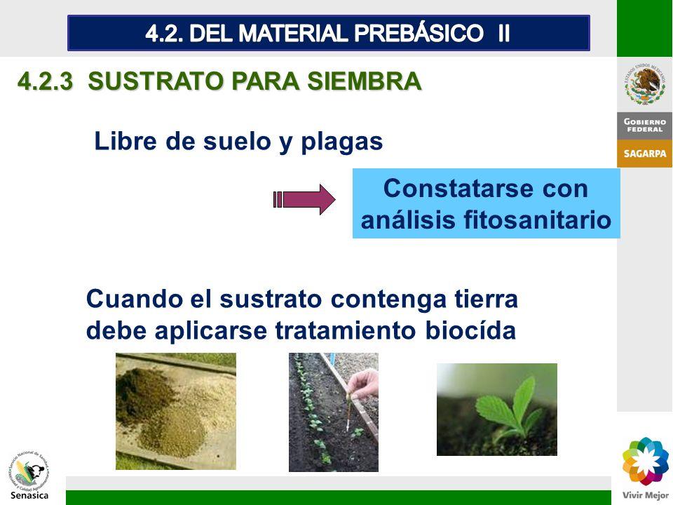 Constatarse con análisis fitosanitario 4.2.3 SUSTRATO PARA SIEMBRA Libre de suelo y plagas Cuando el sustrato contenga tierra debe aplicarse tratamien