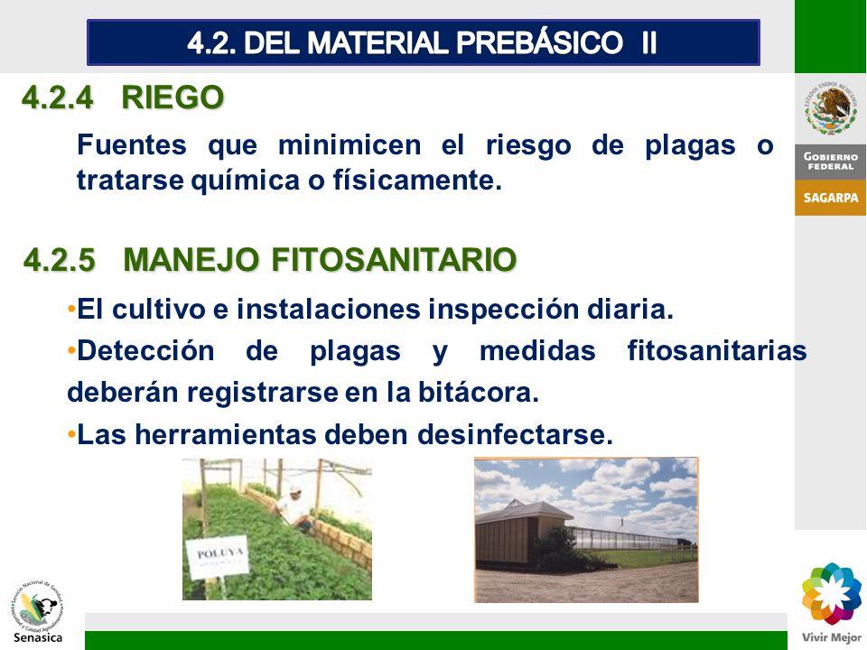 4.2.4 RIEGO Fuentes que minimicen el riesgo de plagas o tratarse química o físicamente. 4.2.5 MANEJO FITOSANITARIO El cultivo e instalaciones inspecci