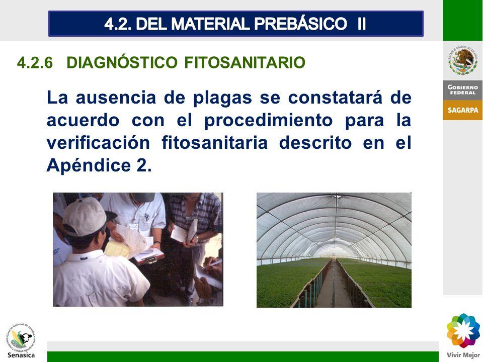 4.2.6 DIAGNÓSTICO FITOSANITARIO La ausencia de plagas se constatará de acuerdo con el procedimiento para la verificación fitosanitaria descrito en el