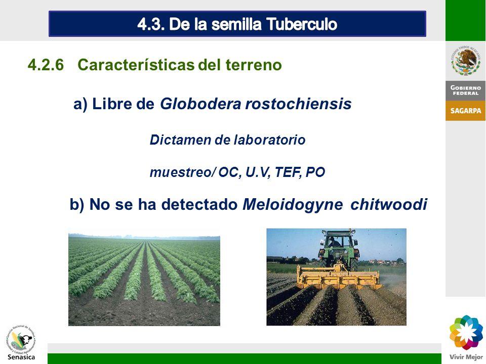 4.2.6 Características del terreno a) Libre de Globodera rostochiensis Dictamen de laboratorio muestreo/ OC, U.V, TEF, PO b) No se ha detectado Meloido