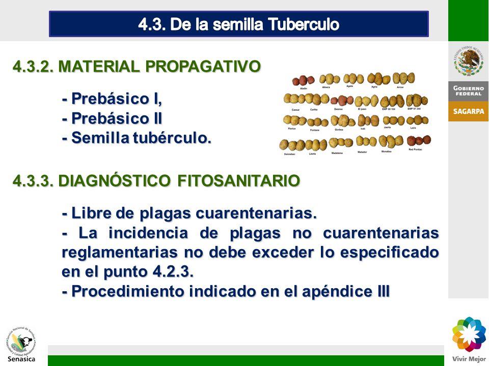 4.3.2. MATERIAL PROPAGATIVO - Prebásico I, - Prebásico II - Semilla tubérculo. 4.3.3. DIAGNÓSTICO FITOSANITARIO - Libre de plagas cuarentenarias. - La