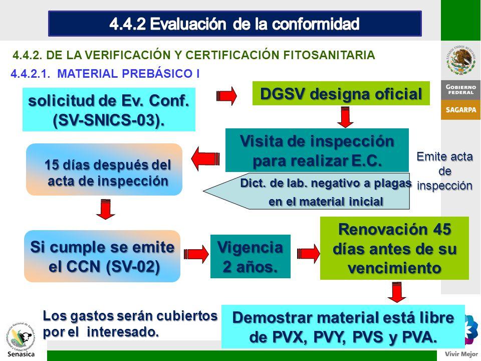 4.4.2. DE LA VERIFICACIÓN Y CERTIFICACIÓN FITOSANITARIA 4.4.2.1. MATERIAL PREBÁSICO I Demostrar material está libre de PVX, PVY, PVS y PVA. 15 días de