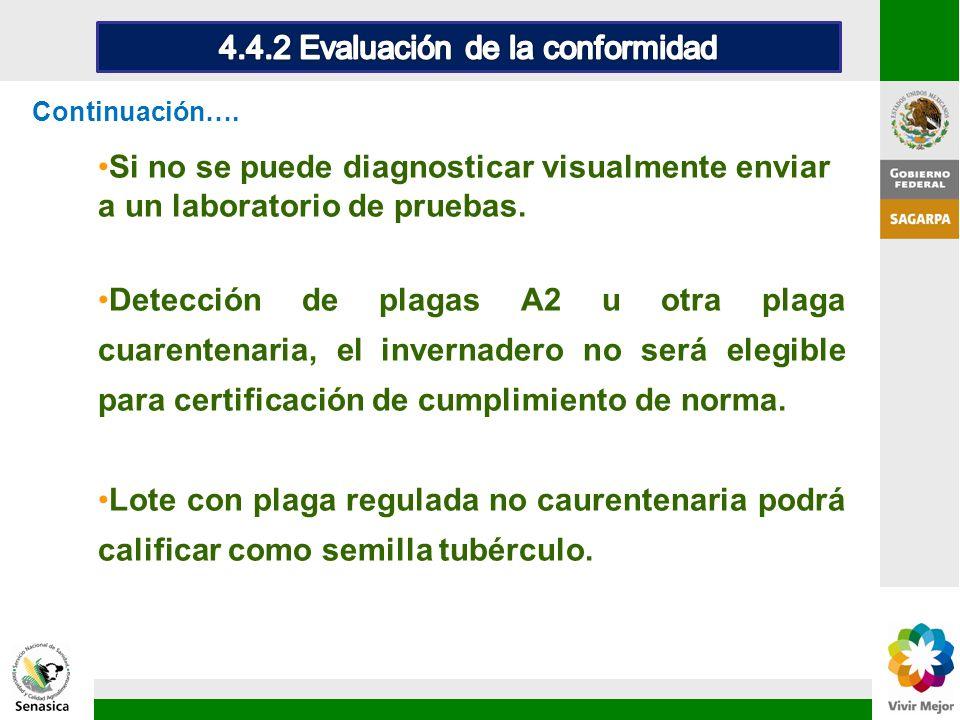 Si no se puede diagnosticar visualmente enviar a un laboratorio de pruebas. Detección de plagas A2 u otra plaga cuarentenaria, el invernadero no será