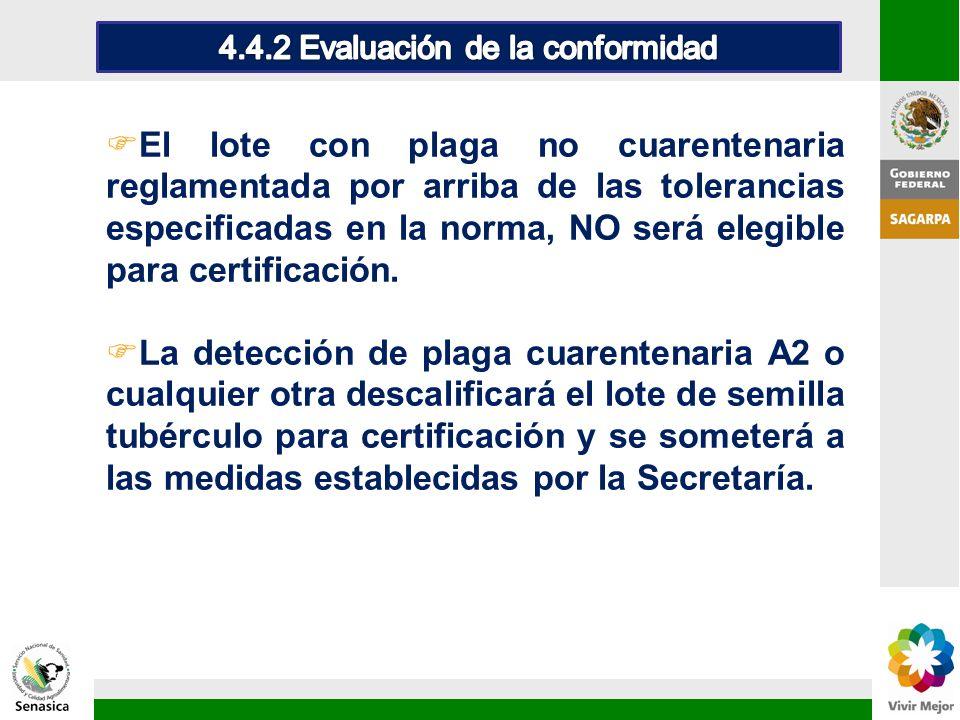 FEl lote con plaga no cuarentenaria reglamentada por arriba de las tolerancias especificadas en la norma, NO será elegible para certificación. FLa det