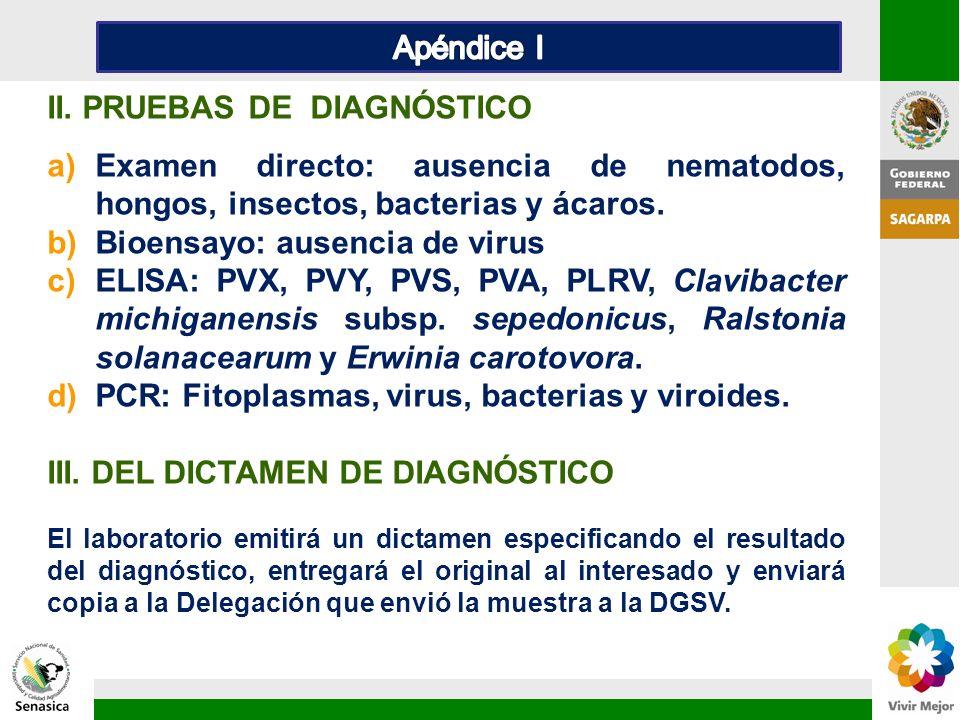 II. PRUEBAS DE DIAGNÓSTICO a)Examen directo: ausencia de nematodos, hongos, insectos, bacterias y ácaros. b)Bioensayo: ausencia de virus c)ELISA: PVX,