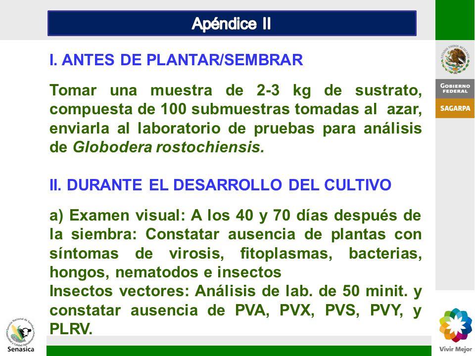 I. ANTES DE PLANTAR/SEMBRAR Tomar una muestra de 2-3 kg de sustrato, compuesta de 100 submuestras tomadas al azar, enviarla al laboratorio de pruebas