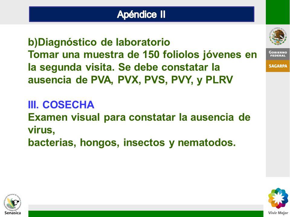 b)Diagnóstico de laboratorio Tomar una muestra de 150 foliolos jóvenes en la segunda visita. Se debe constatar la ausencia de PVA, PVX, PVS, PVY, y PL
