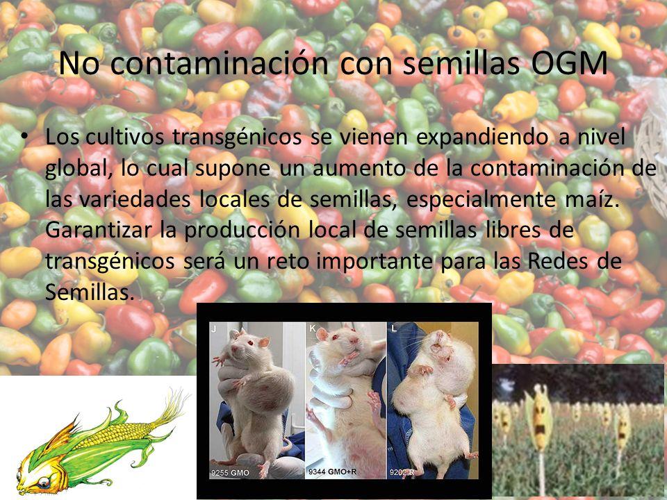 No contaminación con semillas OGM Los cultivos transgénicos se vienen expandiendo a nivel global, lo cual supone un aumento de la contaminación de las variedades locales de semillas, especialmente maíz.