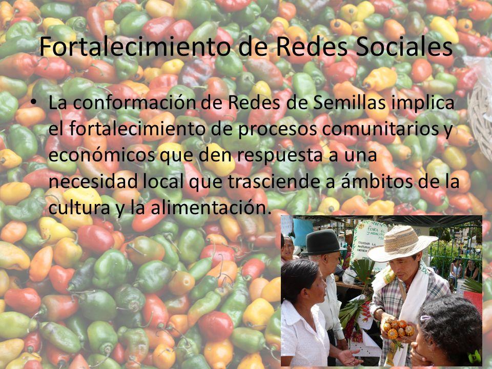 Fortalecimiento de Redes Sociales La conformación de Redes de Semillas implica el fortalecimiento de procesos comunitarios y económicos que den respuesta a una necesidad local que trasciende a ámbitos de la cultura y la alimentación.