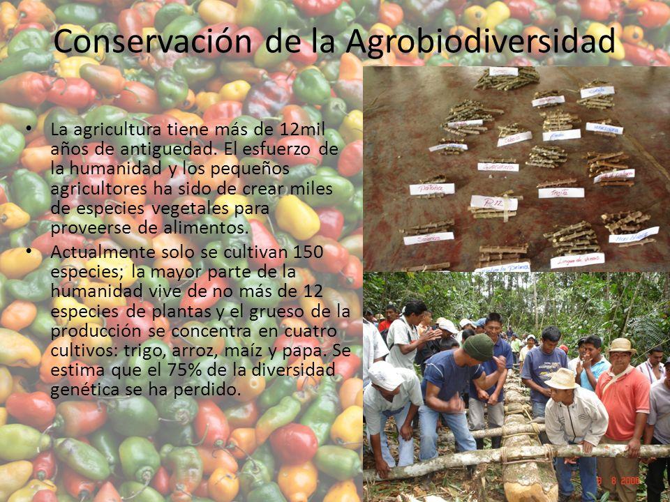 Conservación de la Agrobiodiversidad La agricultura tiene más de 12mil años de antiguedad.