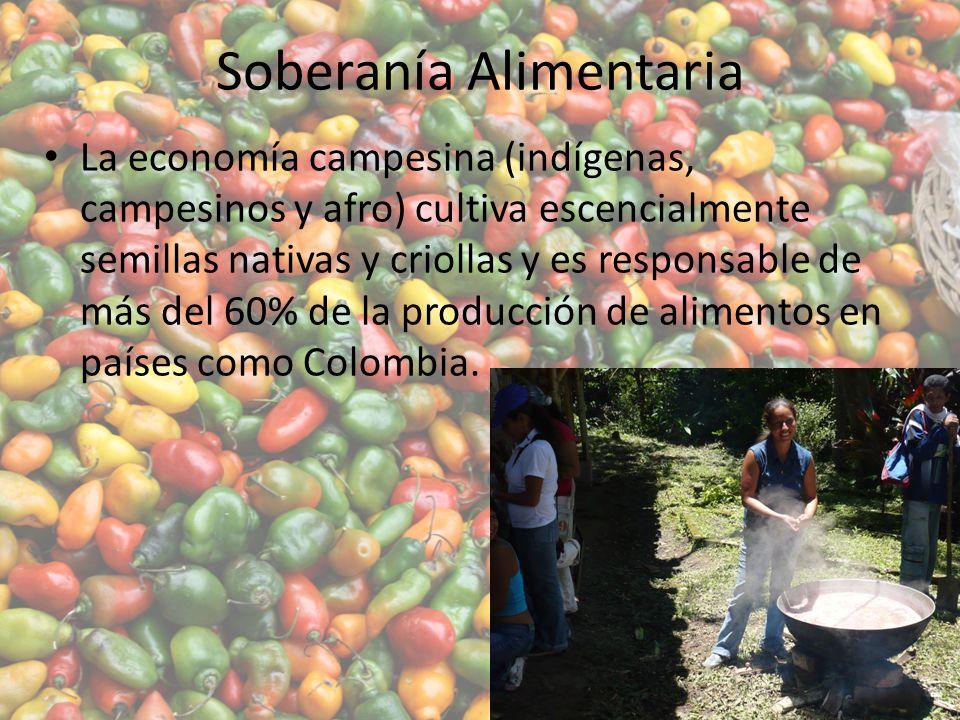 Soberanía Alimentaria La economía campesina (indígenas, campesinos y afro) cultiva escencialmente semillas nativas y criollas y es responsable de más del 60% de la producción de alimentos en países como Colombia.