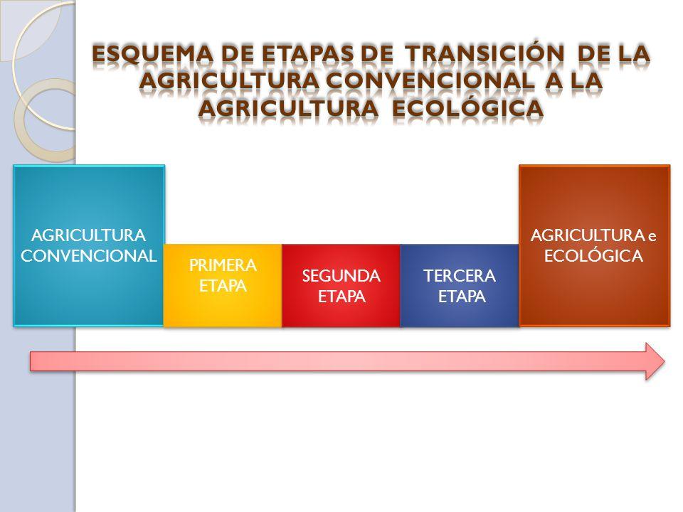 AGRICULTURA CONVENCIONAL PRIMERA ETAPA PRIMERA ETAPA SEGUNDA ETAPA TERCERA ETAPA TERCERA ETAPA AGRICULTURA e ECOLÓGICA