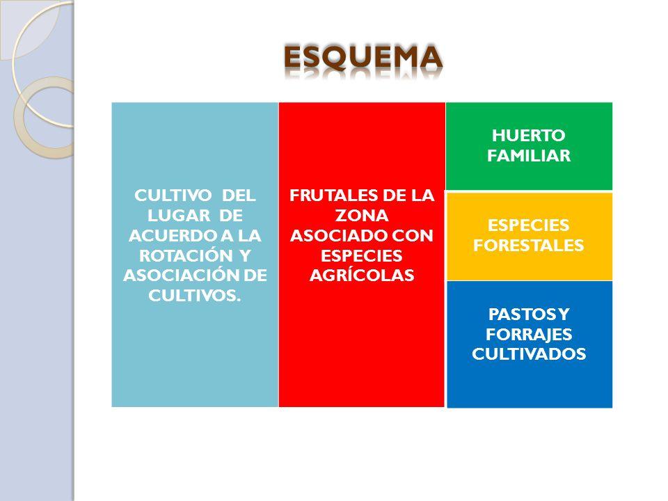 CULTIVO DEL LUGAR DE ACUERDO A LA ROTACIÓN Y ASOCIACIÓN DE CULTIVOS. FRUTALES DE LA ZONA ASOCIADO CON ESPECIES AGRÍCOLAS HUERTO FAMILIAR ESPECIES FORE