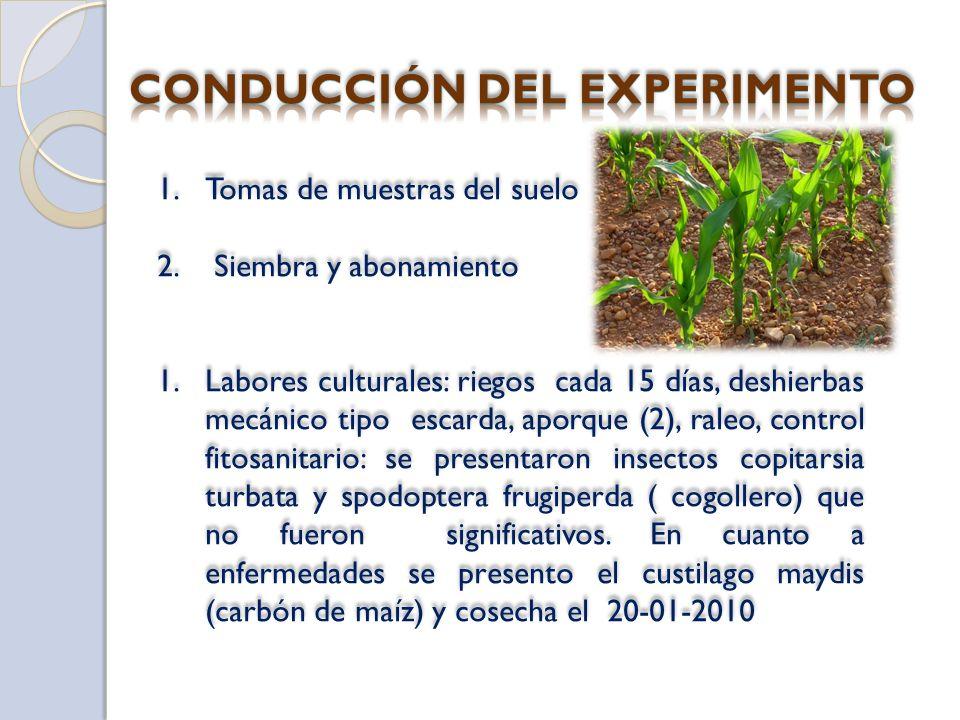1.Tomas de muestras del suelo 2. Siembra y abonamiento 1.Labores culturales: riegos cada 15 días, deshierbas mecánico tipo escarda, aporque (2), raleo
