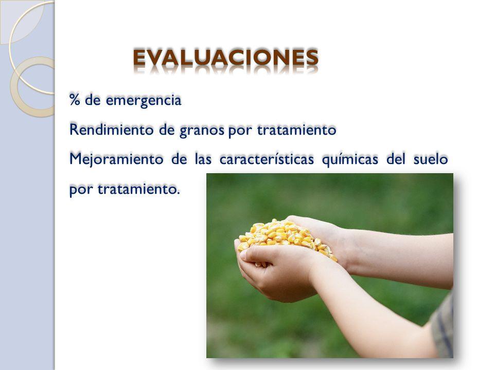 % de emergencia Rendimiento de granos por tratamiento Mejoramiento de las características químicas del suelo por tratamiento.