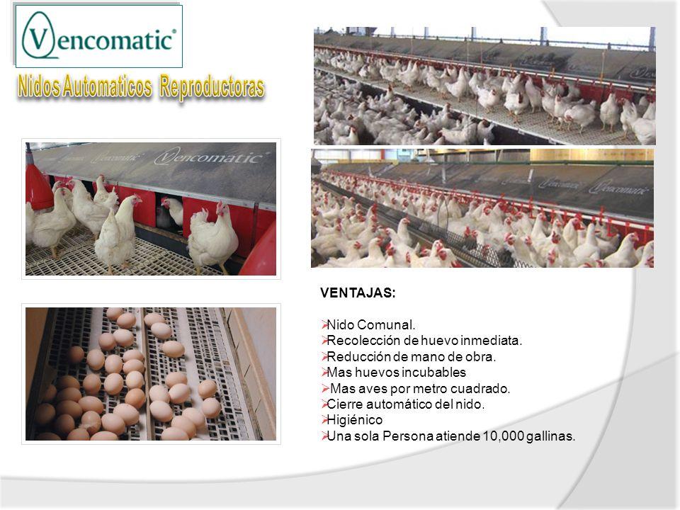 VENTAJAS: Nido Comunal. Recolección de huevo inmediata. Reducción de mano de obra. Mas huevos incubables Mas aves por metro cuadrado. Cierre automátic