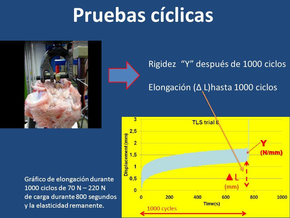 Pruebas cíclicas Rigidez Y después de 1000 ciclos Elongación (Δ L)hasta 1000 ciclos Gráfico de elongación durante 1000 ciclos de 70 N – 220 N de carga