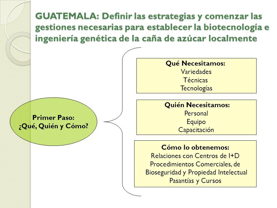 GUATEMALA: Definir las estrategias y comenzar las gestiones necesarias para establecer la biotecnología e ingeniería genética de la caña de azúcar loc