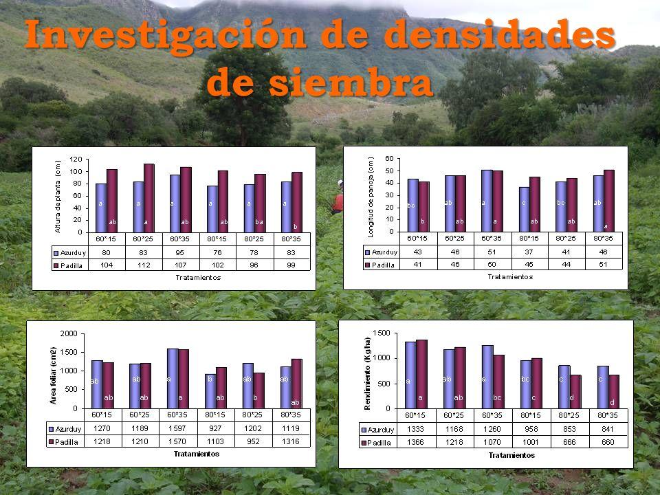 Investigación de densidades de siembra