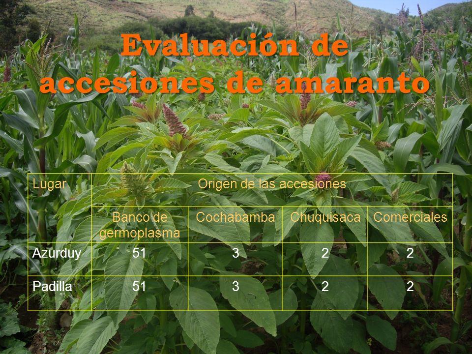 Evaluación de accesiones de amaranto LugarOrigen de las accesiones Banco de germoplasma CochabambaChuquisacaComerciales Azurduy51322 Padilla51322