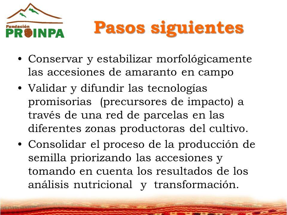 Pasos siguientes Conservar y estabilizar morfológicamente las accesiones de amaranto en campo Validar y difundir las tecnologías promisorias (precursores de impacto) a través de una red de parcelas en las diferentes zonas productoras del cultivo.