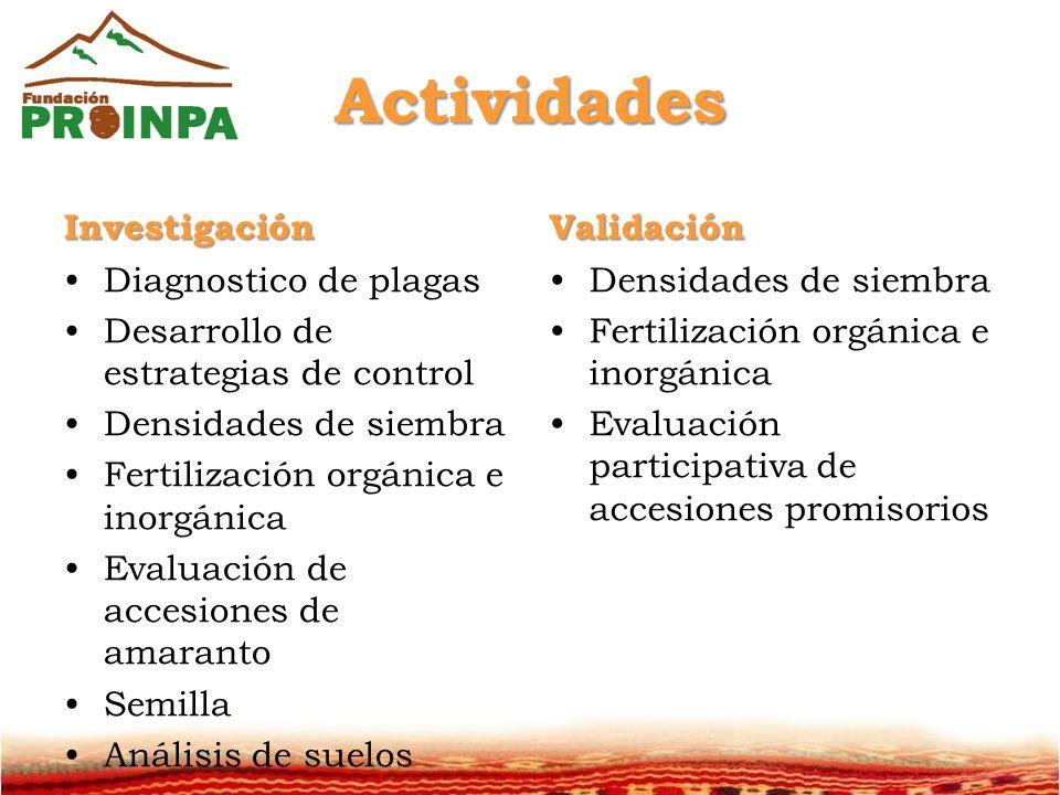 Actividades Investigación Diagnostico de plagas Desarrollo de estrategias de control Densidades de siembra Fertilización orgánica e inorgánica Evaluación de accesiones de amaranto Semilla Análisis de suelos Validación Densidades de siembra Fertilización orgánica e inorgánica Evaluación participativa de accesiones promisorios