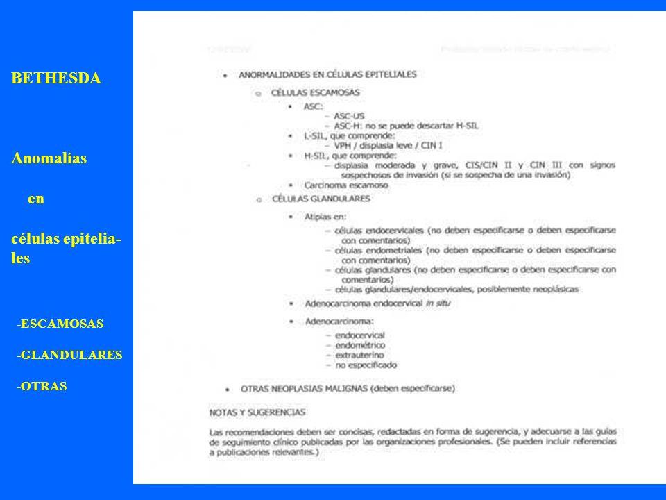 24 BETHESDA Anomalías en células epitelia- les -ESCAMOSAS -GLANDULARES -OTRAS