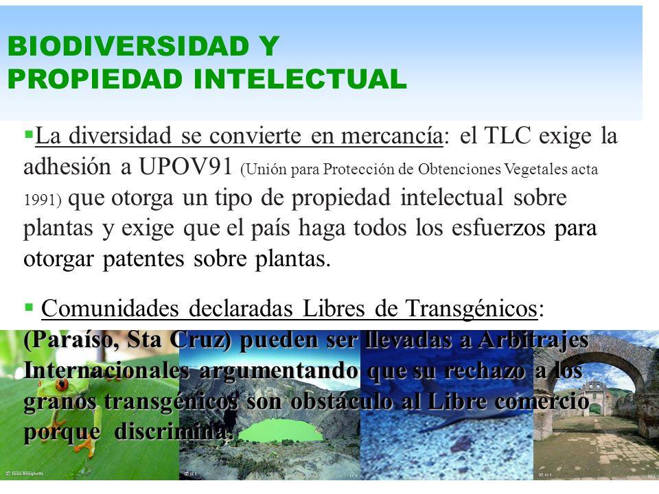 BOSQUES En el TLC la Ley Forestal no se considera parte de la Legislación Ambiental, sino que se convierte, como el Agua, en Ley Comercial. Este trata
