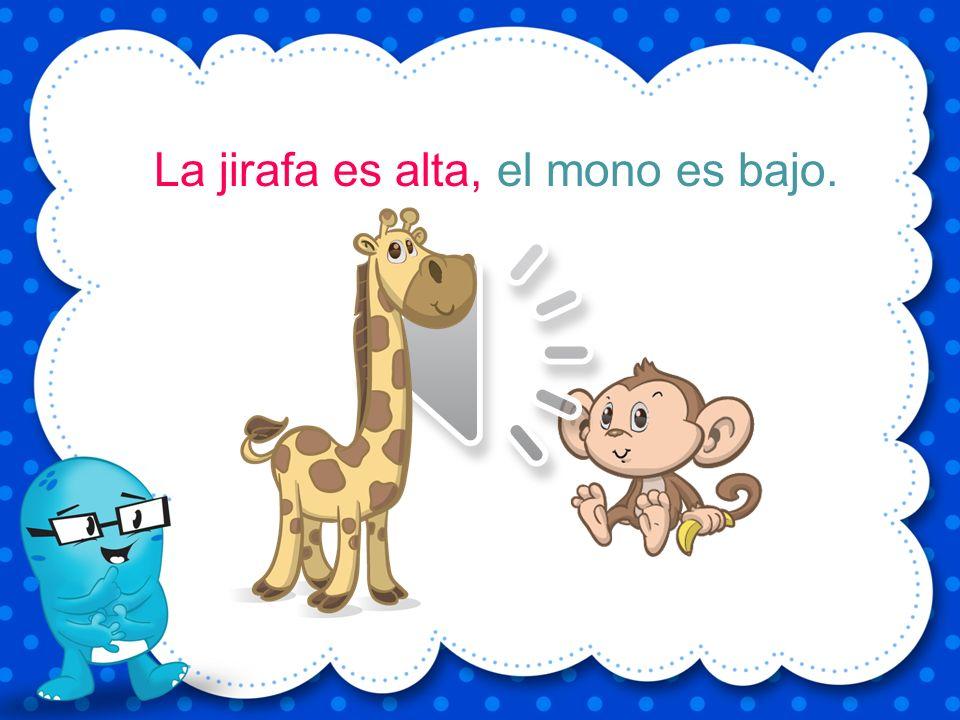 La jirafa es alta, el mono es bajo.