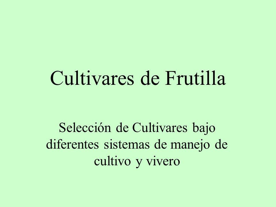 Cultivares de Frutilla Selección de Cultivares bajo diferentes sistemas de manejo de cultivo y vivero