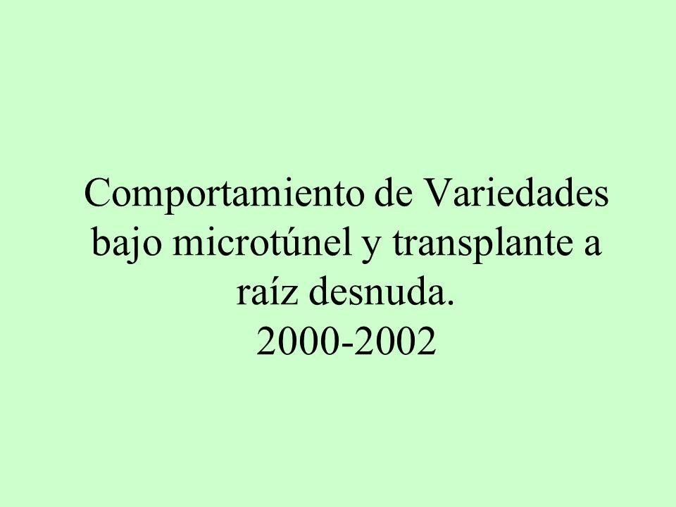 Comportamiento de Variedades bajo microtúnel y transplante a raíz desnuda. 2000-2002
