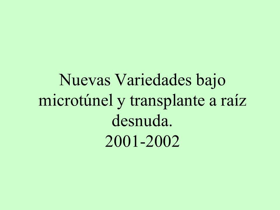 Nuevas Variedades bajo microtúnel y transplante a raíz desnuda. 2001-2002
