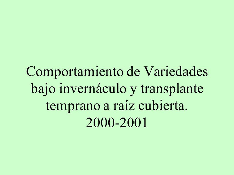 Comportamiento de Variedades bajo invernáculo y transplante temprano a raíz cubierta. 2000-2001
