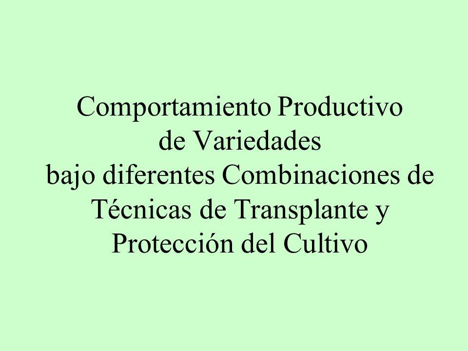 Comportamiento Productivo de Variedades bajo diferentes Combinaciones de Técnicas de Transplante y Protección del Cultivo