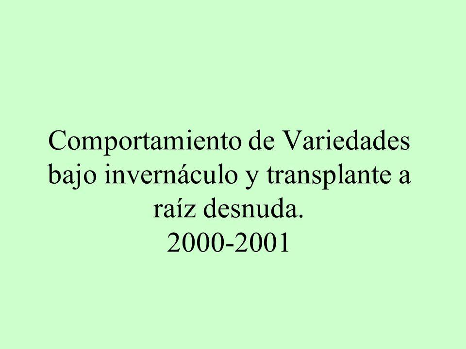 Comportamiento de Variedades bajo invernáculo y transplante a raíz desnuda. 2000-2001