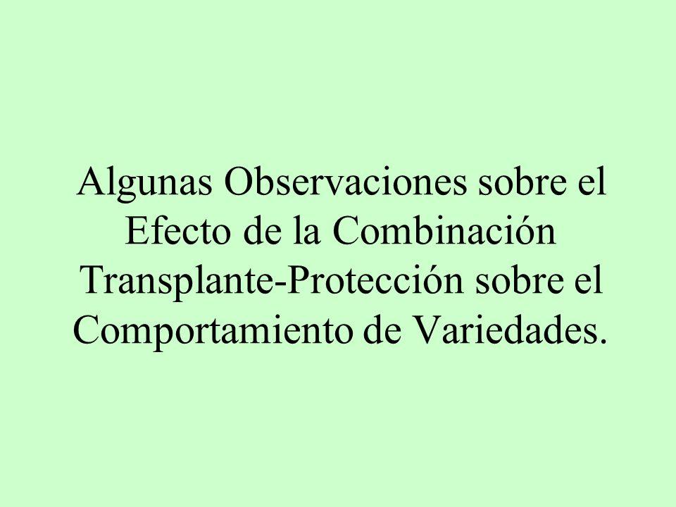 Algunas Observaciones sobre el Efecto de la Combinación Transplante-Protección sobre el Comportamiento de Variedades.