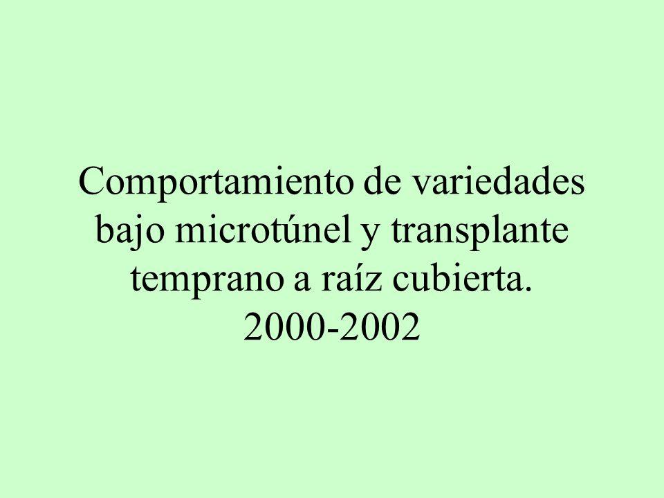 Comportamiento de variedades bajo microtúnel y transplante temprano a raíz cubierta. 2000-2002
