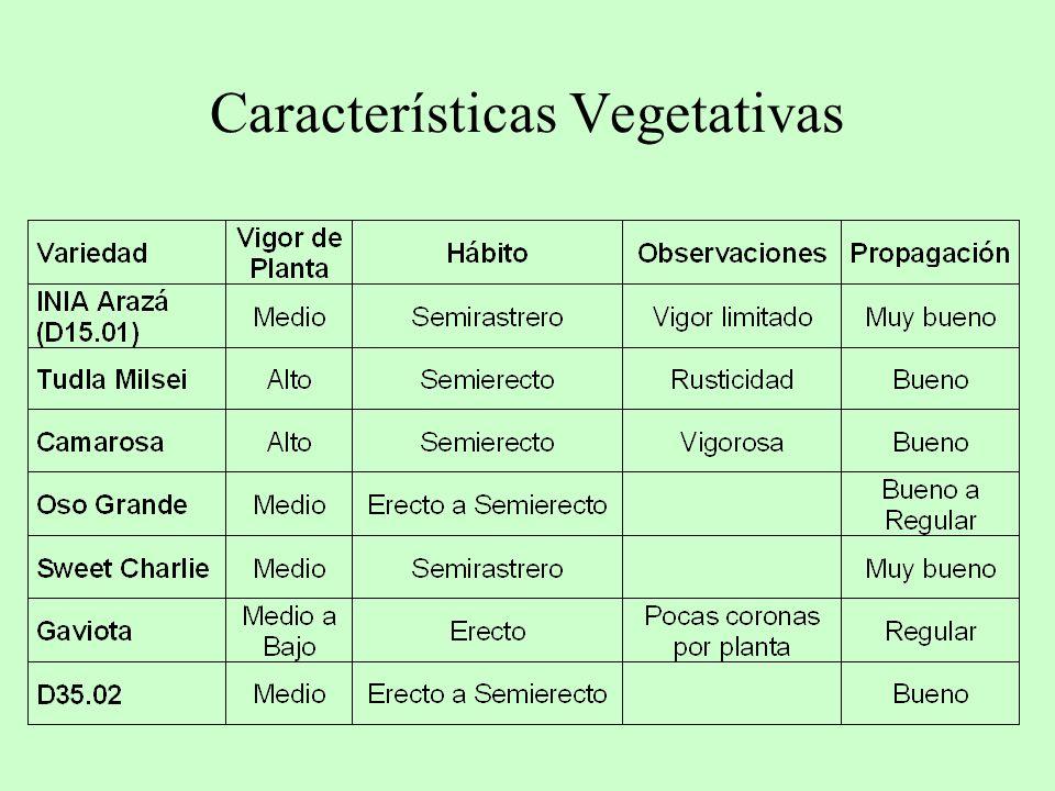 Características Vegetativas