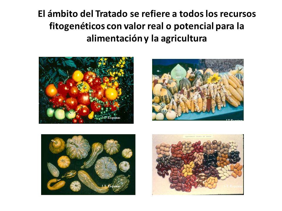 El ámbito del Tratado se refiere a todos los recursos fitogenéticos con valor real o potencial para la alimentación y la agricultura J.T.Esquinas