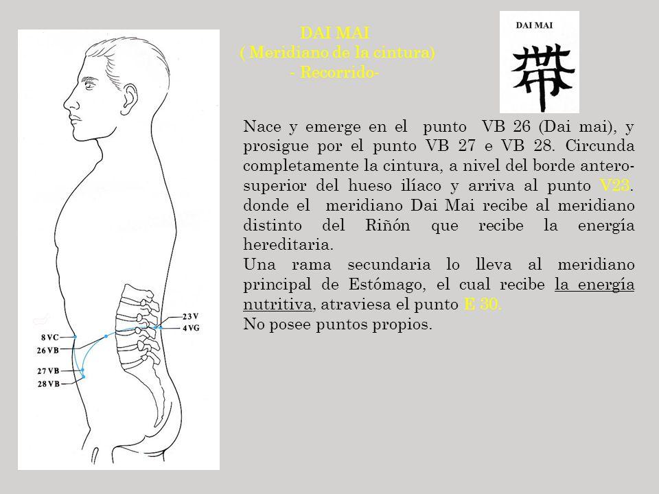 DAI MAI ( Meridiano de la cintura) - Recorrido- Nace y emerge en el punto VB 26 (Dai mai), y prosigue por el punto VB 27 e VB 28. Circunda completamen